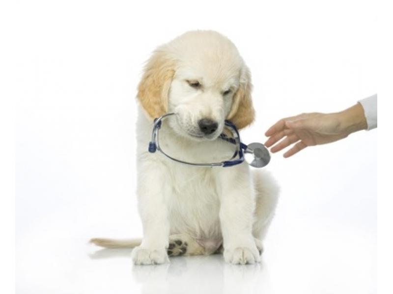 Комбиниран тест за Кучета Parvo-Corona-Giardia