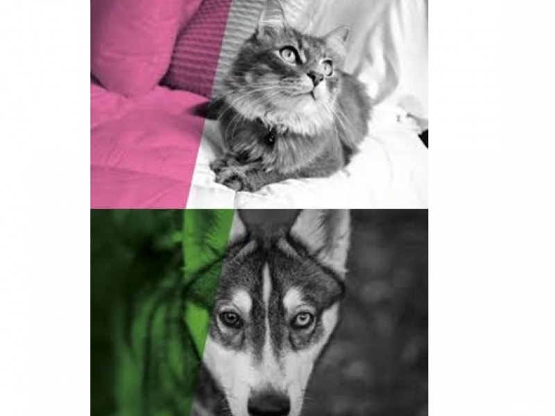 Бърз тест за определяне на Кръвна група при Кучета и Котки