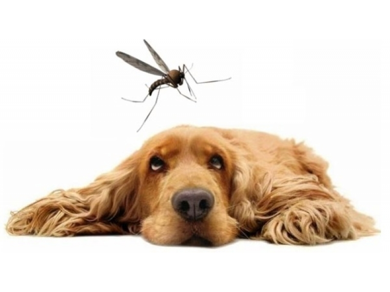 Бърз тест за Кучета - Leishmania Ab