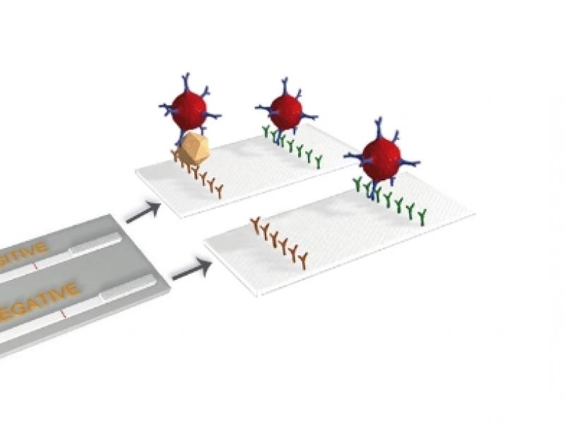 Бърз тест – E. coli F5 (К99)