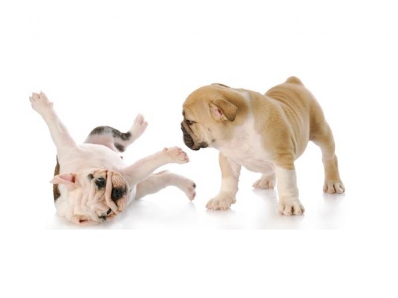 Двоен тест за Кучета CDV (Гана) + CPV Ag (Парвовироза)