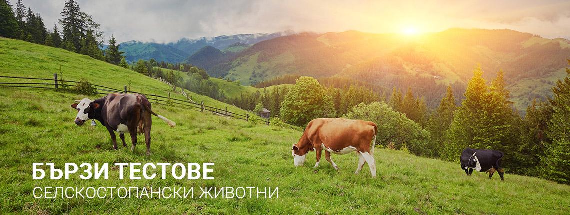 VetLab Bulgaria