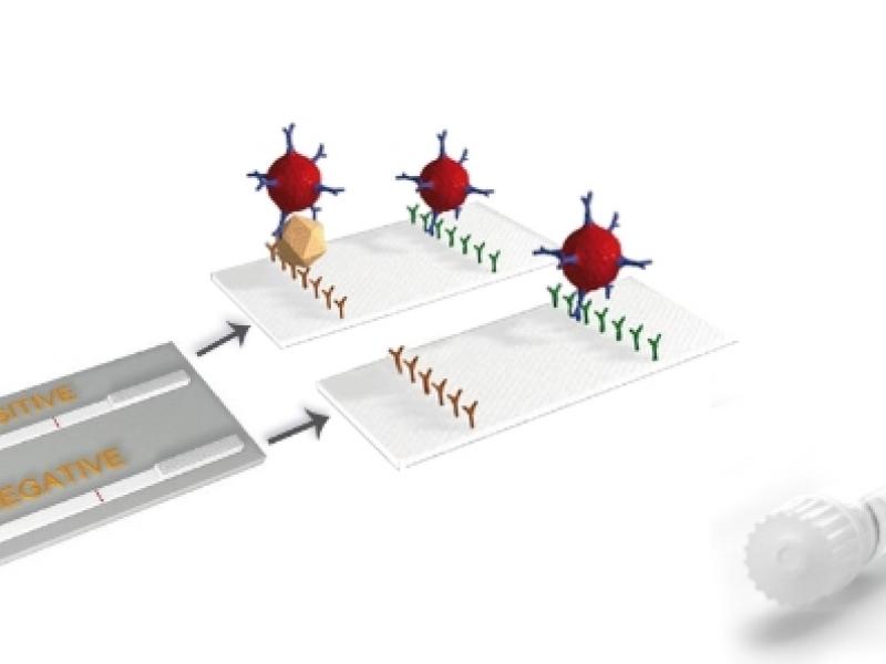 Конбиниран тест  – Rotavirus, Coronavirus, E.coli F5, Cryptosporidium, Clostridium perfringens